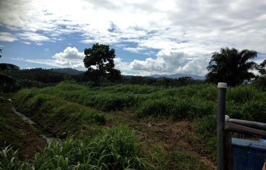 A vista from the finca or farm where the eco-village will be.