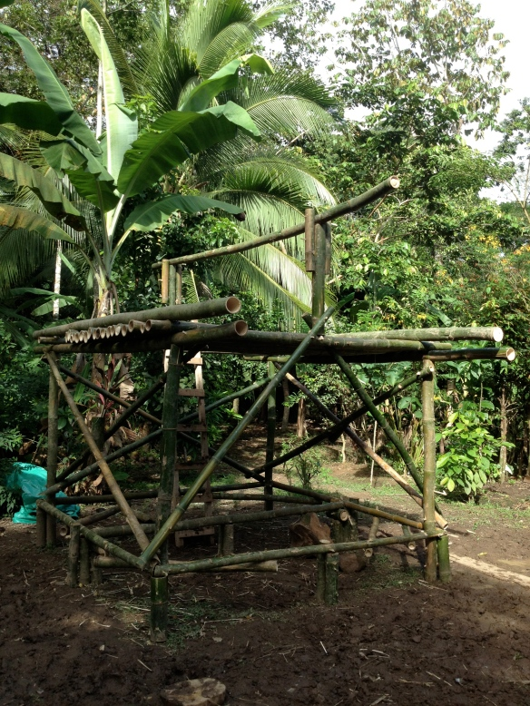 Half-way finished with our bamboo bungalow. The bamboo growth here is incredible.  There is an abundance of this renewable resource.