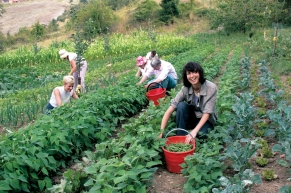 """Ananda Permaculture as seen in Ananda Movie, """"Finding Happiness."""""""